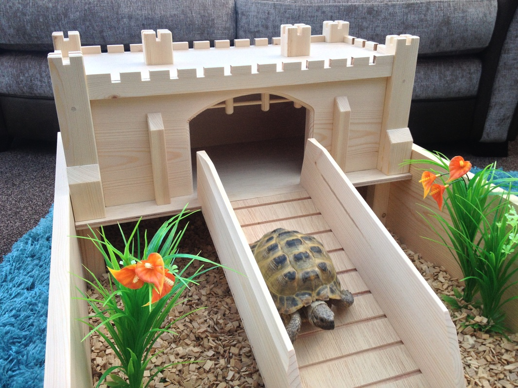 Tortoise tables pet and tortoise world for Tortoise table org uk site plants